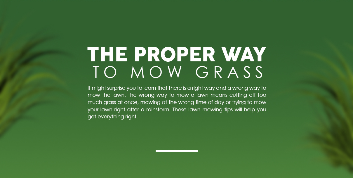 When To Mow Grass