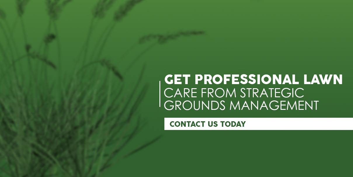 Professional Commercial Landscapers